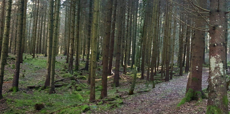 Paysages d'arrière automne au Pied du Jura